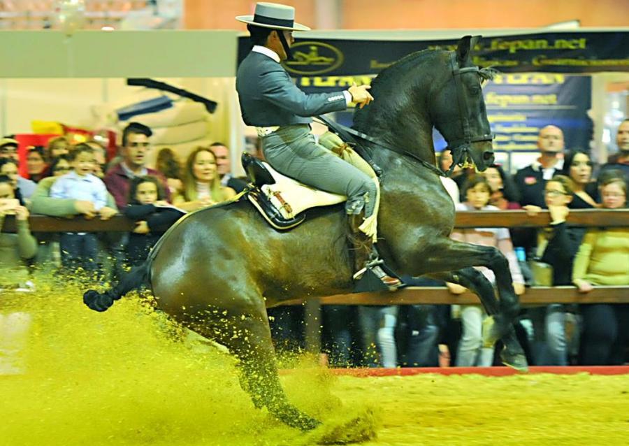 Actualidad Actualidad Andalucía lidera el censo nacional de caballos de pura raza española